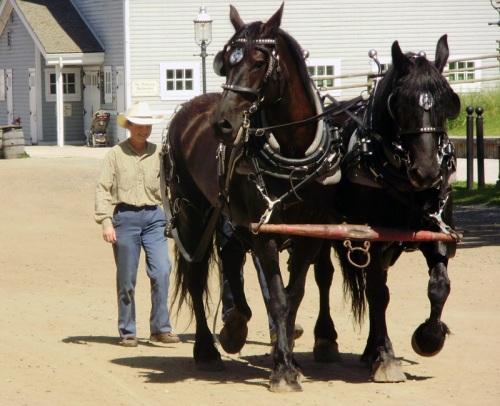 H Photo Challenge Horses